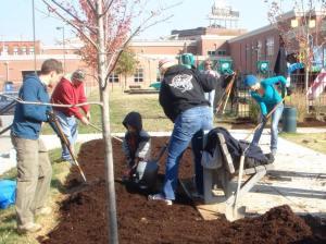 Well tree planting Nov